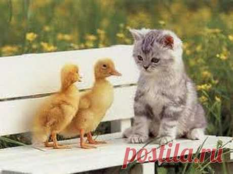 ▶ Collection of Funny Cat Videos - YouTube