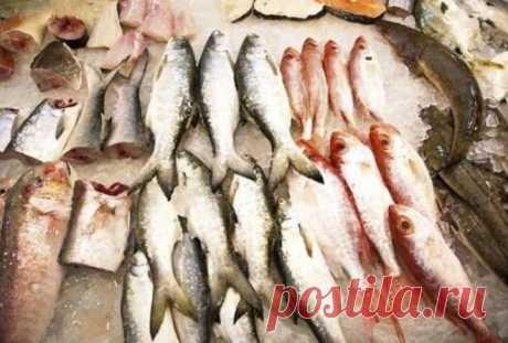 Самая опасная рыба, которую нельзя есть