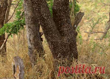 Искусство маскировки или разминка для глаз. Сможете ли вы найти на этих фотографиях спрятавшихся животных? Загрузка...