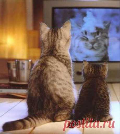 До чего техника дошла - нашу маму по телевизору показывают