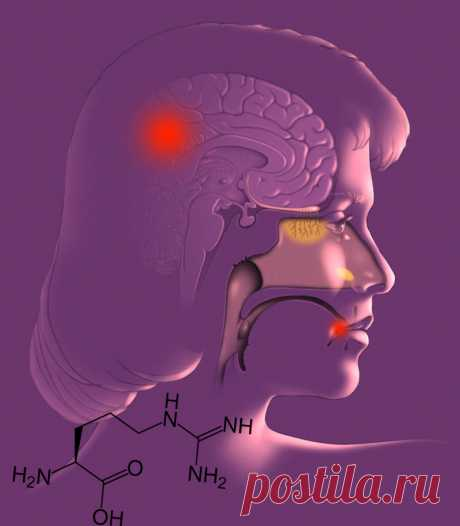 Что провоцирует герпес и болезнь Альцгеймера При соблюдении принципов правильного питания важно не только употреблять качественные и полезные продукты. Значение имеет и поддержание баланса витаминов и аминокислот, которые при переизбытке наносят вред организму.
