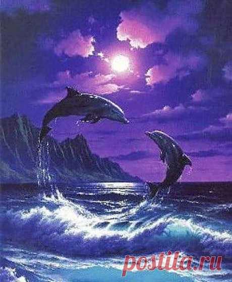 Ночные дельфины