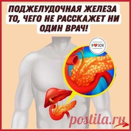 СОВЕТЫ в Instagram: «☝ПОДЖЕЛУДОЧНАЯ ЖЕЛЕЗА То, чего не расскажет ни один врач! Поджелудочная железа — один из важных внутренних органов человеческого тела…»
