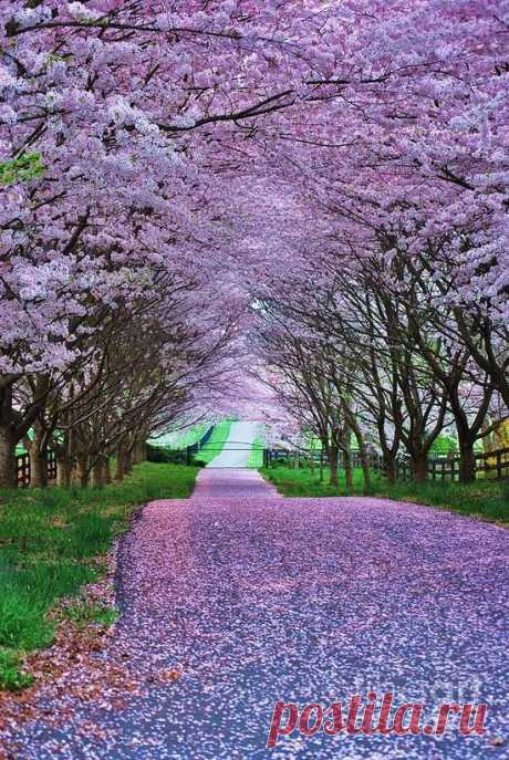 It looks so peaceful, I wish i could find somewhere this beautiful so i could take a long walk enjoy the scenery ..........................