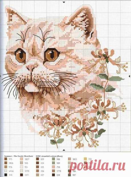 Кошки для вышивания в крестом   DIY - PatronesMil