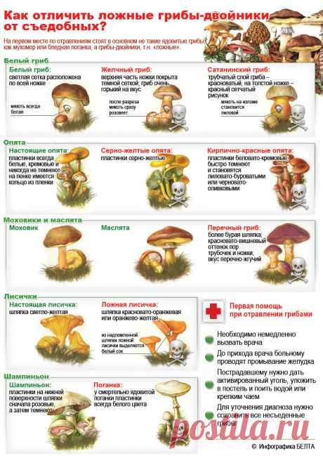 Las setas venenosas de Rusia: Como determinar la seta venenosa, como distinguir la seta comestible (la ESTAMPA, la FOTO)