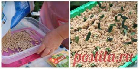 Como cultivar las plantas de los pepinos en los serrines calientes — Kopilochka de los consejos útiles