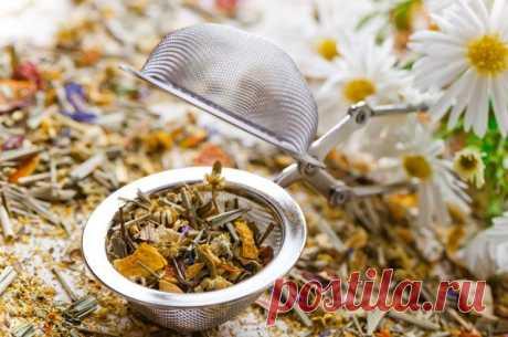 Лекарственные растения: 45 рецептов для здоровья желудка и печени
