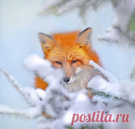 Вестник — «Привет из России!» на Яндекс.Фотках
