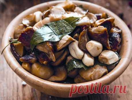 Соленые грибы: фото, рецепты приготовления, как вкусно засолить грузди, опята, рыжики, сыроежки и вешенки Как быстро и вкусно засолить грибы в домашних условиях: простые рецепты приготовления заготовок