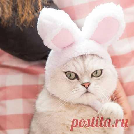 А кто у нас тут милый зайчик? Или котик? Заячьи ушки для вашего котика ========================== #alishopping  https://s.click.aliexpress.com/e/9MyriCa?product_id=3..