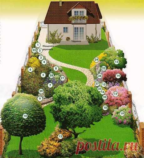 План посадки деревьев кустарников и цветов | Загородный Дизайн: идеи и советы для дома и дачи