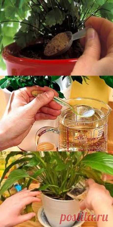 10 лучших подкормок для ваших комнатных цветов, которые оживят даже сухой куст!