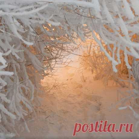 Дорога в сказку. Фото: Александр Гоголин