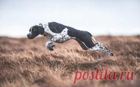 Лучшие снимки с конкурса Dog Photographer of the Year