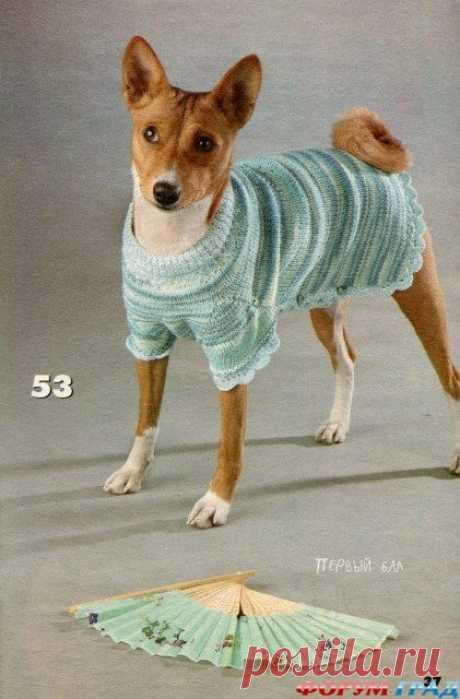 Вязанная одежда для собак. - Страница 4 - Вязаные вещи собаке и кошке – они хотят тоже пофорсить немножко - Форум-Град