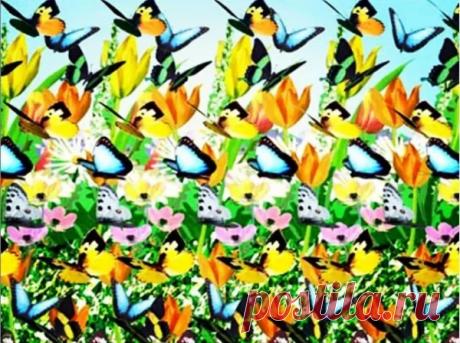 Зарядка для глаз. Стереокартинки на летнюю тему. Как увидеть изображение   Длядуши   Яндекс Дзен