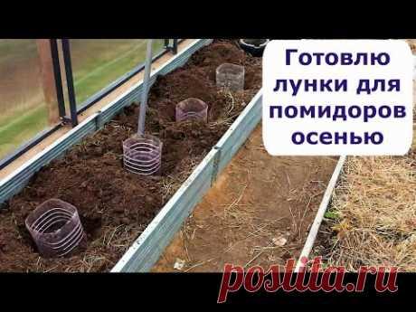 419 Готовлю лунки для помидоров осенью