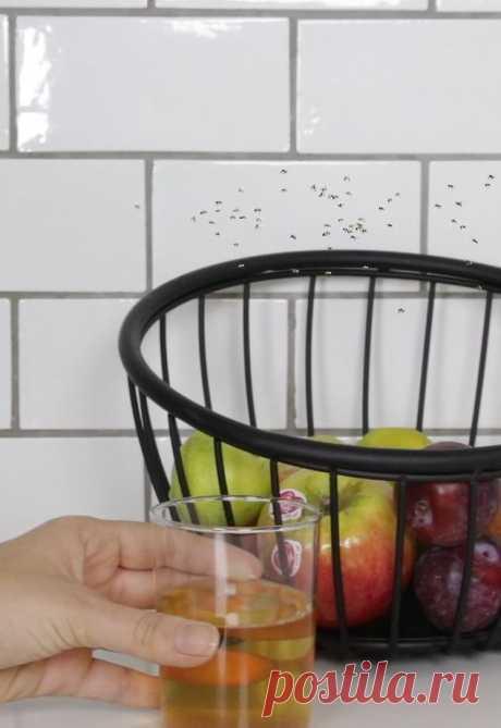 Как избавиться от плодовых мушек | Делимся советами