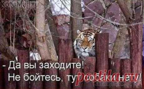 Красавица   KotoMail.ru