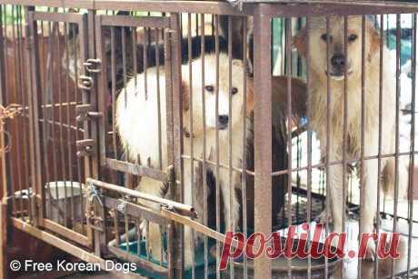 Семья продала двух преданных друзей на собачью мясную ферму
