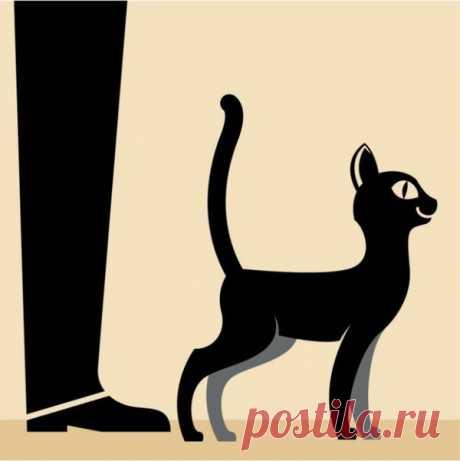 Как понять свою кошку: словарь для перевода с кошачьего на человеческий — Наука и жизнь