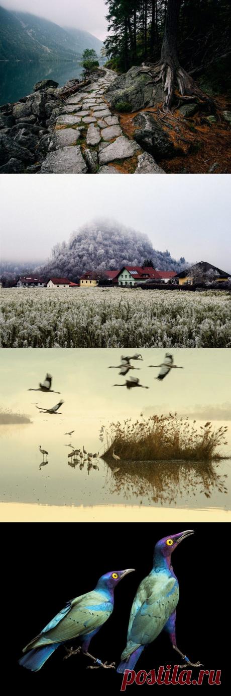 Лучшие фотографии марта от National Geographic / Туристический спутник