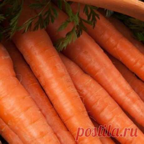 7 эффективных способов посева семян моркови - МирТесен