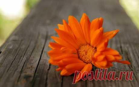 Уметь прощать - особый дар от Бога