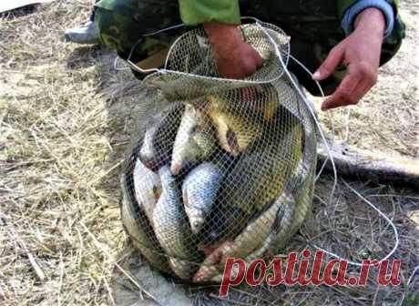Полный садок за 2 часа - нашел приманку которая, как конфетки для рыбы, только успевал вываживать | ЭХ, ПОРЫБАЧИМ! | Яндекс Дзен