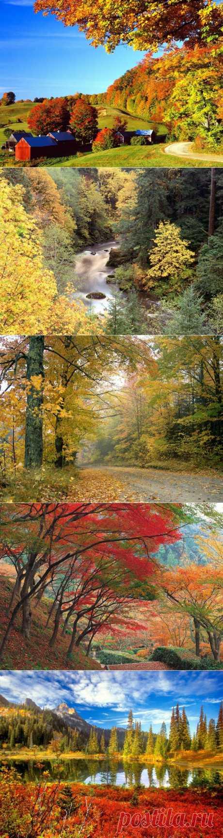 Фото красивой осени для дневника.