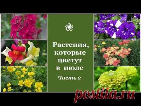 ❀ Растения, которые цветут в июле. Часть 2