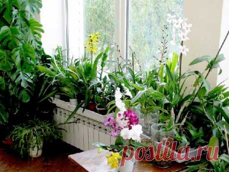 YOU WANT THE MAGNIFICENT FLOWER BED IN THE APARTMENT? THEN REMEMBER SEKRETIKI