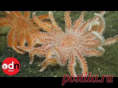 Необычные морские существа попали на камеру у побережья Калифорнии - Новости Mail.ru