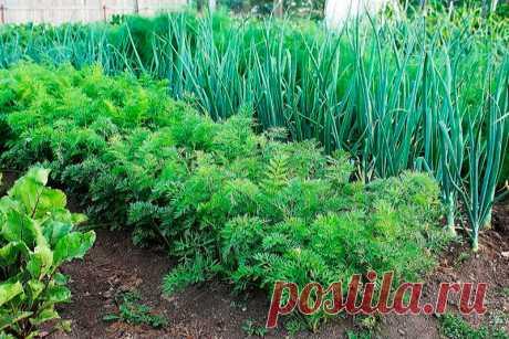 Посади сейчас и весной будешь с зеленью на 3 недели раньше! Какую зелень сажать под зиму?   Огород и дача на урале   Яндекс Дзен
