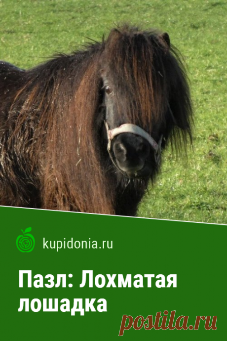 Пазл онлайн: Лохматая лошадка. Пазл онлайн с симпатичной лошадкой из серии «Пазлы с животными».