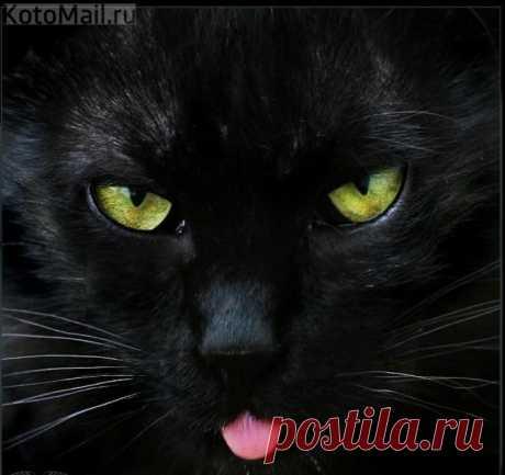 Чёрный квадрат Мурлевича