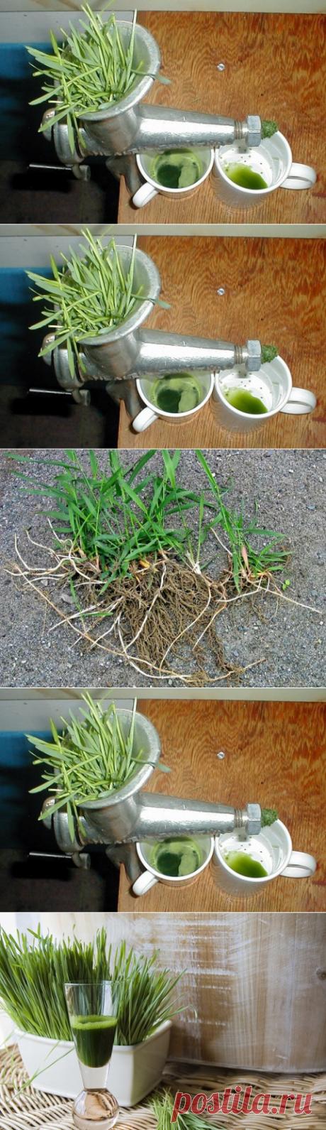 Этот сорняк - находка для тех, кто хочет дожить до глубокой старости, не зная недугов