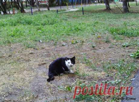 Коты и клады | Кошки & Коты | Яндекс Дзен Когда коты шарят в траве и роются в земле, не спешите делать выводы. И подозревать их в мелкой пакости. Совсем не обязательно они задались целью испортить вам клумбу. Может быть, их цель другая, более серьезная. Да нет, не вскопать клумбу и посадить цветы. Или даже кошачью мяту. Это вы сами делайте. А коты, может быть, коты ищут клады. Или их прячут. Или одни прячут, а другие ищут...