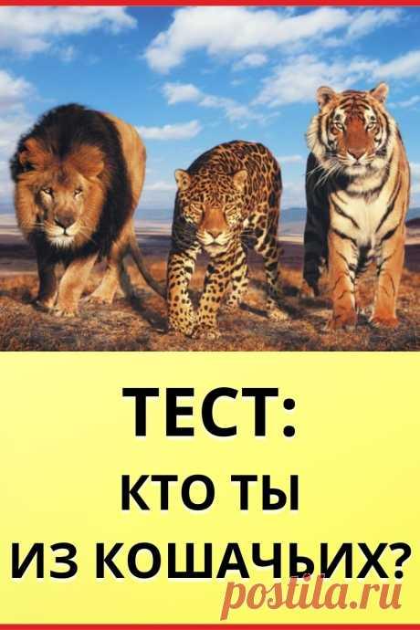 Тест: Кто ты из кошачьих?