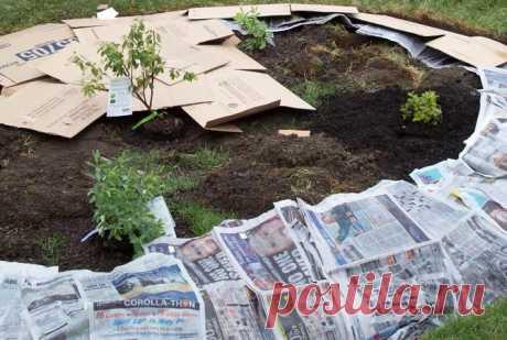 Бумага как удобрение и лекарство для растений - Садоводка