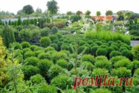 Ландшафтный дизайн — FloraPrice.Ru