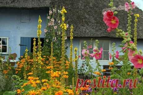 Желтый является особым в спектре цветов — он обозначает радость и счастье. В дополнение к этому, желтый цвет также наиболее заметен человеческим глазом из всех цветов. Имея более мягкий и более привлекательный оттенок, чем оранжевый или красный, желтые садовые цветы многолетники всегда обладают чарующим эффектом. От нежного до яркого, многолетние желтые цветы всегда заслуживают места в любом саду...