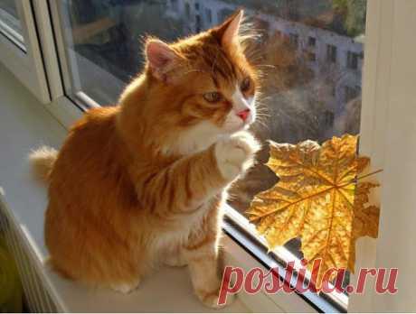 Осень на окне)))