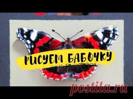 Как нарисовать бабочку пастелью — kalachevaschool.ru — Поэтапный урок Елены Таткиной
