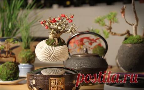 Air Bonsai: волшебные деревца бонсай, парящие в воздухе - IVOREE  Это тоже от волшебной женщины Елены Эллер