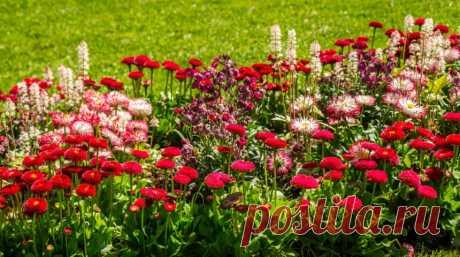 Цветники в одной гамме — 6 соток