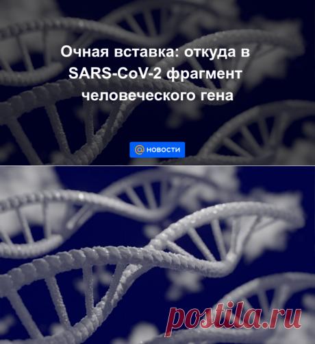 Очная вставка: откуда в SARS-CoV-2 фрагмент человеческого гена - Новости Mail.ru