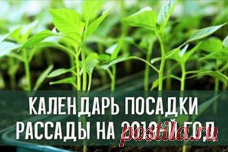 Календарь посадки рассады на 2019-й год   Краше Всех