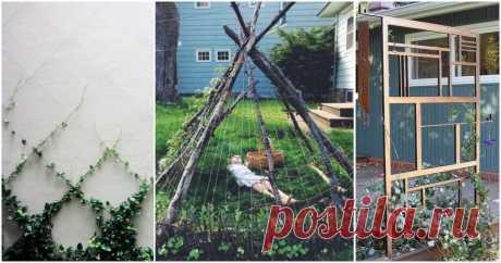 Нужная опора для растений: 15 простых идей шпалер ...